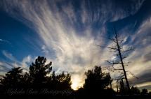 Sunset_11_21-1